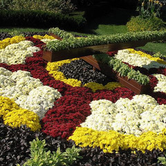Floral clock planting